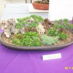 Tree Calendar Seasonal Tips Spring Pittsburgh Bonsai